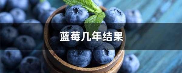蓝莓几年结果