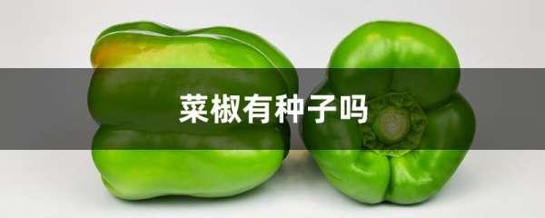 菜椒有种子吗