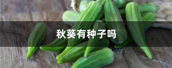 秋葵有种子吗