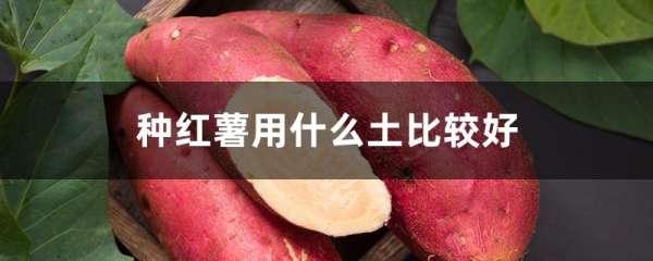 种红薯用什么土比较好