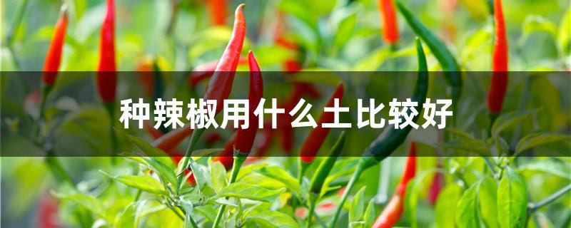 种辣椒用什么土比较好