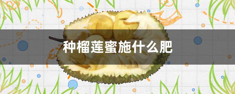 种榴莲蜜施什么肥
