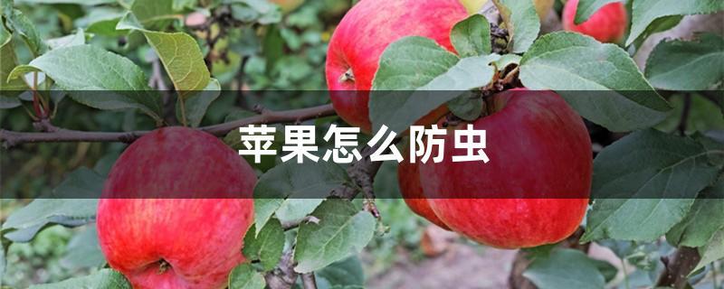 苹果怎么防虫