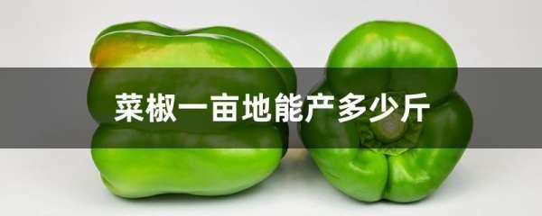 菜椒一亩地能产多少斤