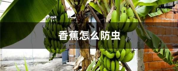 香蕉怎么防虫