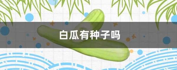 白瓜有种子吗