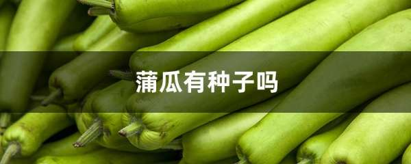 蒲瓜有种子吗