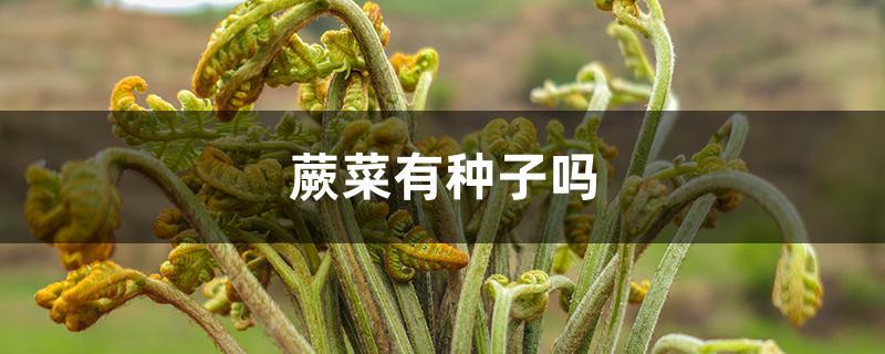 蕨菜有种子吗