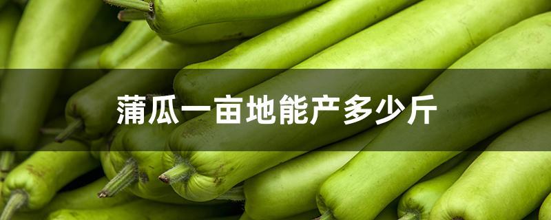 蒲瓜一亩地能产多少斤