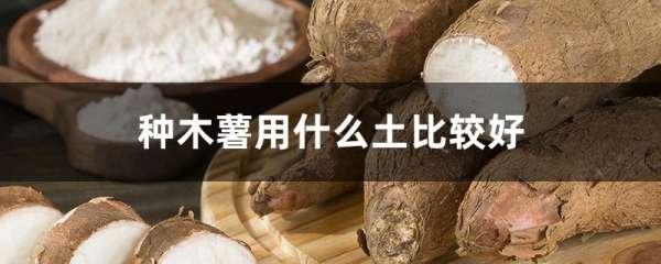 种木薯用什么土比较好