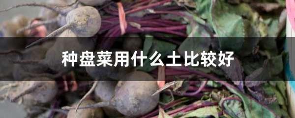 种盘菜用什么土比较好