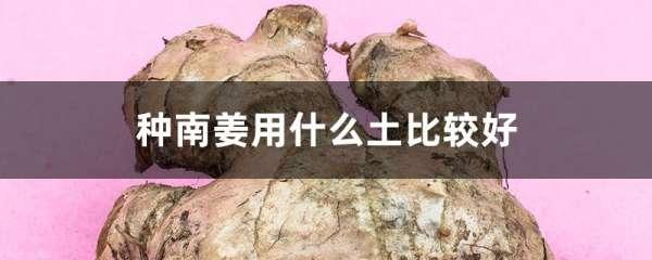 种南姜用什么土比较好