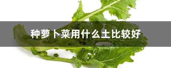 种萝卜菜用什么土比较好