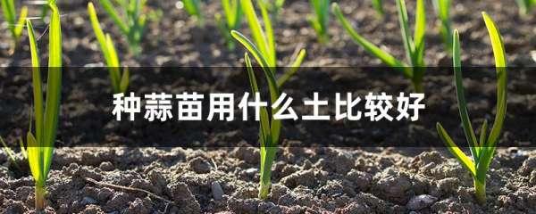 种蒜苗用什么土比较好