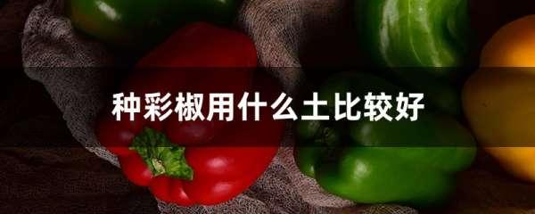 种彩椒用什么土比较好