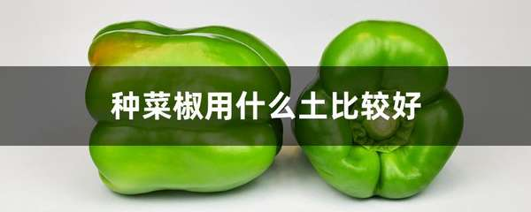 种菜椒用什么土比较好