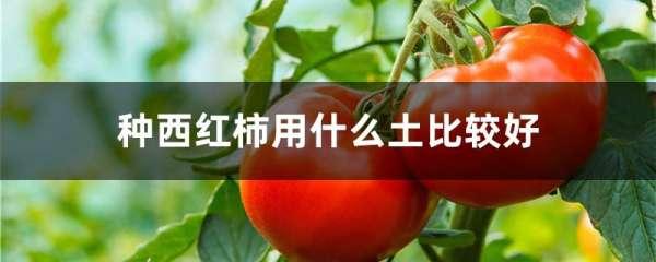 种西红柿用什么土比较好