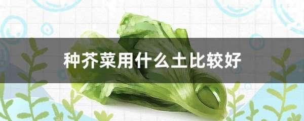 种芥菜用什么土比较好