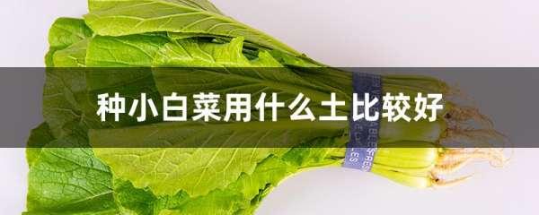 种小白菜用什么土比较好
