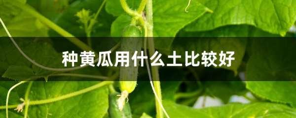 种黄瓜用什么土比较好