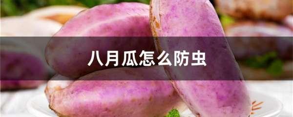 八月瓜怎么防虫