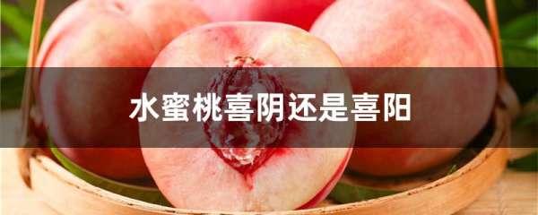 水蜜桃喜阴还是喜阳