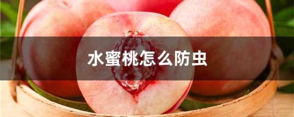 水蜜桃怎么防虫