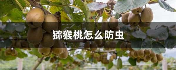 猕猴桃怎么防虫