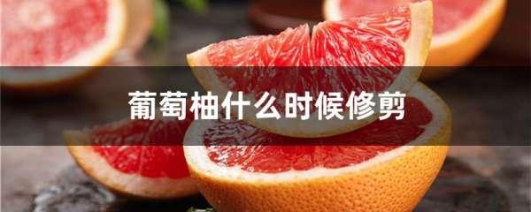 葡萄柚什么时候修剪