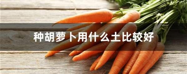 种胡萝卜用什么土比较好