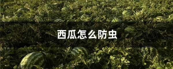 西瓜怎么防虫
