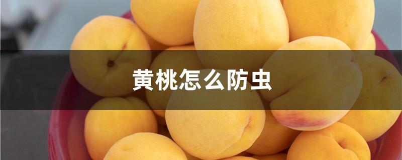 黄桃怎么防虫