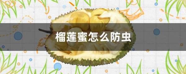 榴莲蜜怎么防虫