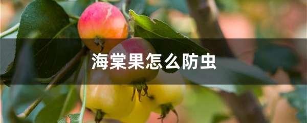 海棠果怎么防虫