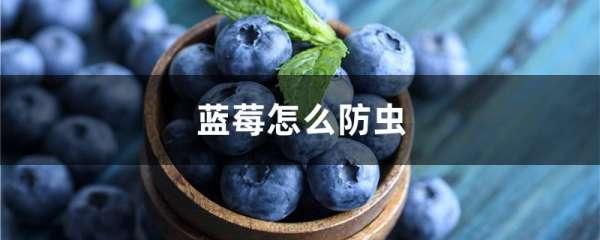 蓝莓怎么防虫