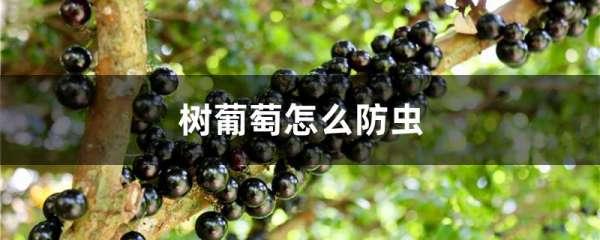 树葡萄怎么防虫