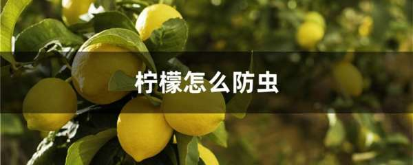 柠檬怎么防虫
