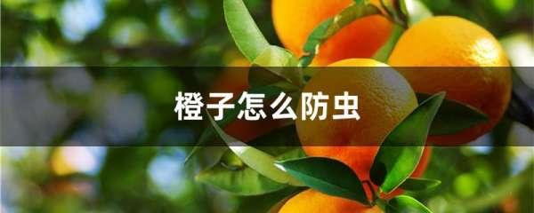 橙子怎么防虫