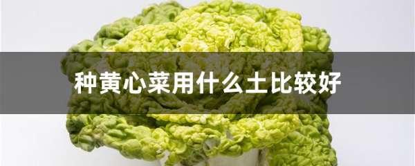 种黄心菜用什么土比较好