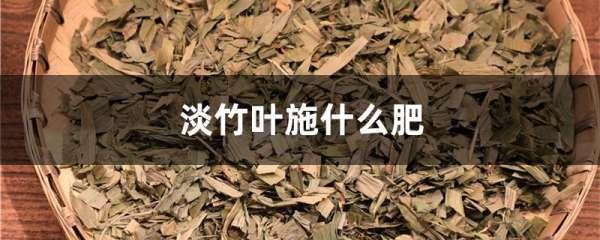 淡竹叶施什么肥