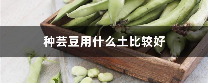 种芸豆用什么土比较好