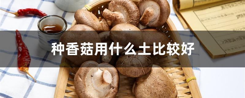 种香菇用什么土比较好