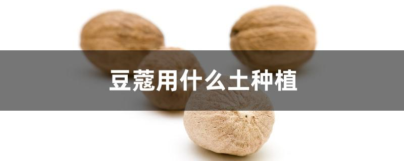 豆蔻用什么土种植