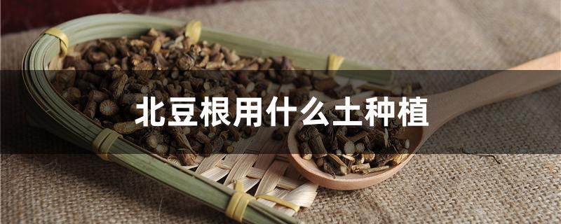 北豆根用什么土种植