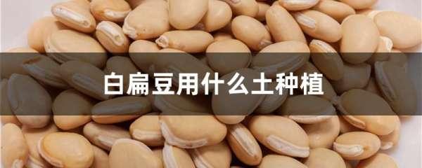 白扁豆用什么土种植