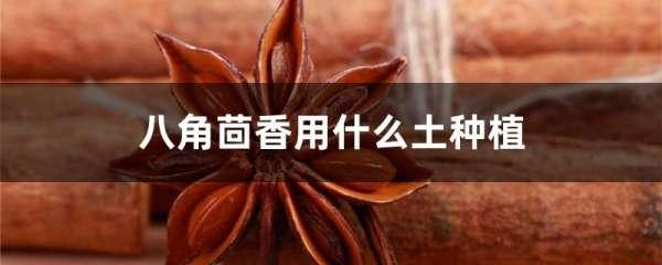 八角茴香用什么土种植