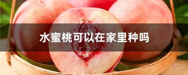水蜜桃可以在家里种吗