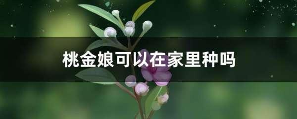桃金娘可以在家里种吗