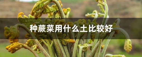 种蕨菜用什么土比较好