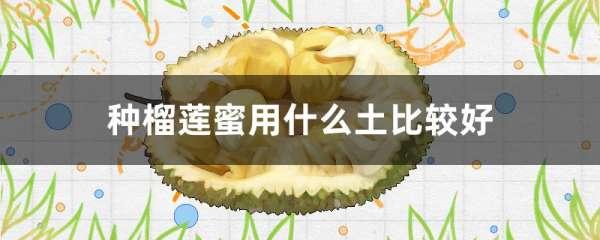 种榴莲蜜用什么土比较好